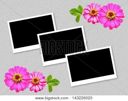 art photo frame and zinnia flower on grunge gray background