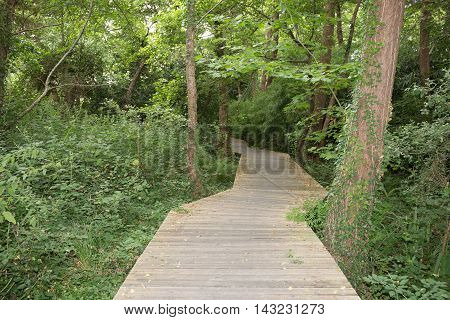 Wooden path in green forest symbol of life