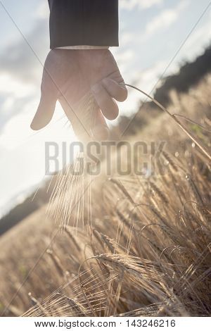 Inside of hand of unidentifiable business man touching wheat plant frond in field under partly cloudy sky.