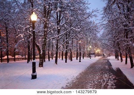 Alley in winter park with snowy trees and lanterns at evening