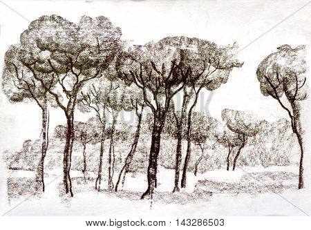 Graphic illustration of Rome. Italy. Trees. Poster Design. Two-color pencil sepia. Duotone