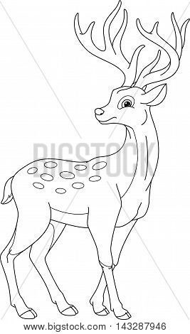 Sika deer on a white background, Coloring Page