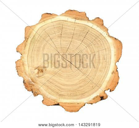 Tree trunk cross section, isolated on white