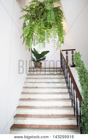 Plant pots decorated in stair garden stock photo