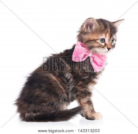 Cute fluffy kitten with a plush bow on a neck on a white background