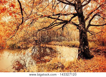 Autumn nature view. Autumn cloudy landscape of old autumn oak tree near the pond in cloudy autumn weather - autumn nature in vintage tones. Autumn colorful landscape view of autumn trees