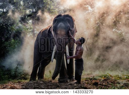 Emotion of the elephant with the mahout, Surin Thailand