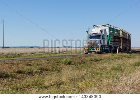 Road train / semi-trailer taking livestock to market in outback Queensland with copyspace