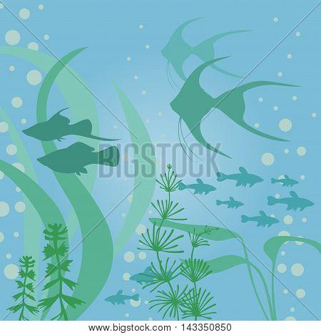 Vector illustrations of aquarium background with fish and algae poster