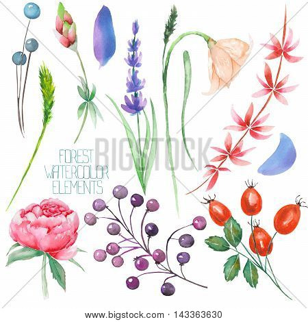 A set, collection with the floral isolated watercolor forest elements (berries, lavender, wildflowers and branches) on a white background