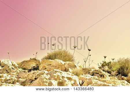 dry flowers or plants on a rocky hill landscape. Toned image.