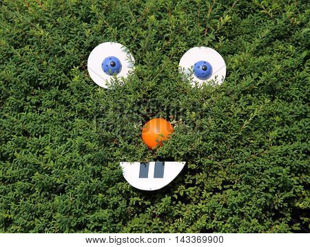 funny smiling face on the green bush