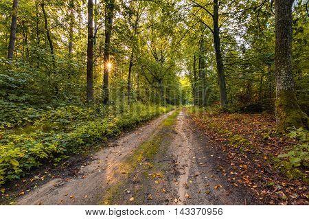 Beautiful Early Autumn European Forest Landscape