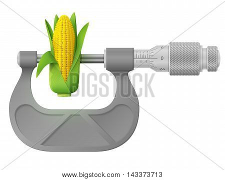 poster of Concept of maize cob and measuring tool. Qualitative vector illustration about agriculture vegetables agronomy health food gastronomy olericulture etc