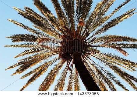 Enormous palm tree in a high angle view