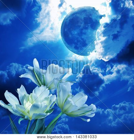 Full moon glowing among the fluffy clouds in the night sky shines blue light white flowers Tulips - beautiful romantic background. This photo collage can be used for music CD covers, love prose, poetic lyrics etc.
