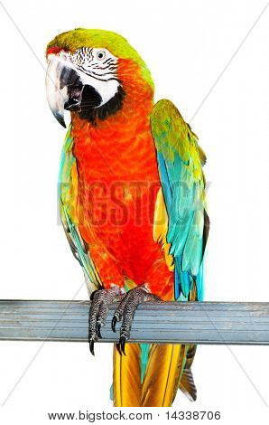 Colorful parrot bird sitting on the perch poster