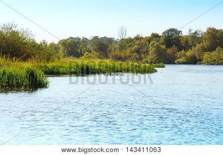 Water surface and long grass on the riverbed