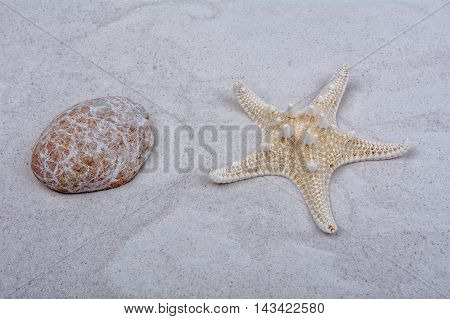 White starfish and one shell on a greay sand