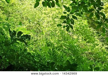 Dense undergrowth in a western Thai forest