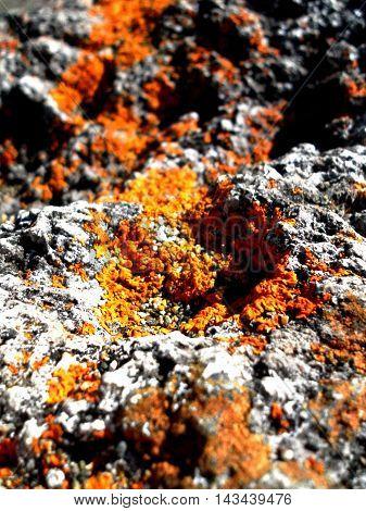 Close-Up of minature fauna growth on rock at Beach Arena Gruesa, Ancud