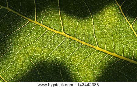 Close up photograph of a leaf on which shadows have been cast.