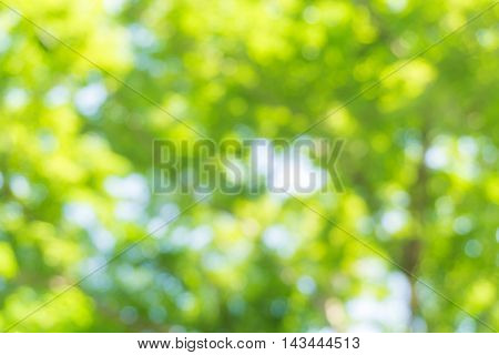 Natural Image Of A Green Blurred Background