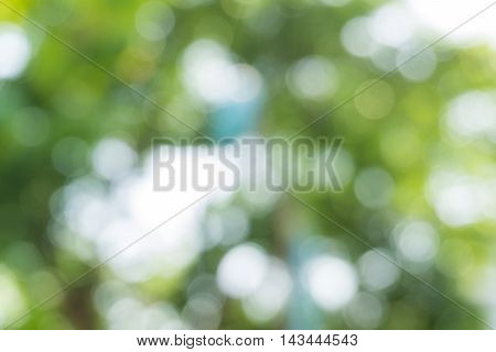 Natural Green Blurred Bokeh Leaf Background.