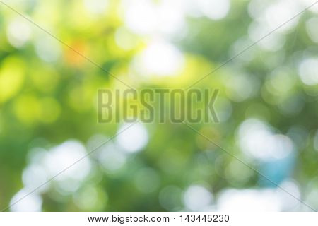 Green Leaf Blurred Background In Natural Spring Green And Blue Colors