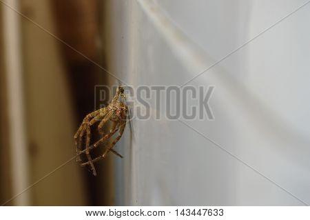 dead spider stuck on the washing machine