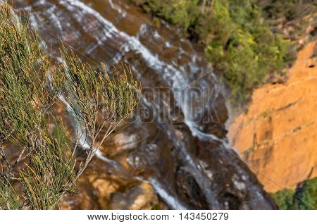 Mountain Pine With Blurred Waterfall On The Background