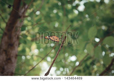Orange Butterfly On The Tree