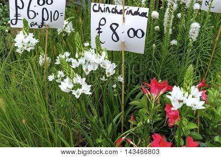 Close up on various white and pink flower and grass seedlings for sale with handwritten placards