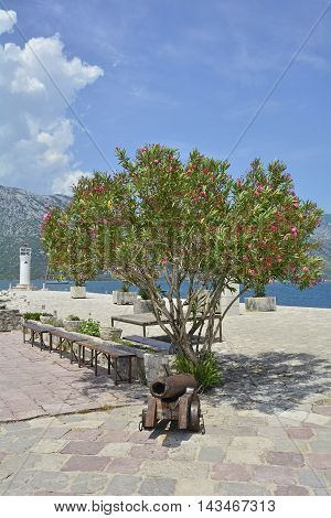 An old cannon and an oleander tree on the histoirc island of Our Lady of the Rock in Kotor Bay off the shore of Perast.
