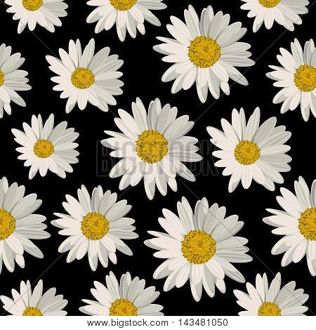 Seamless pattern with white daisies on black background. Vector illustration.