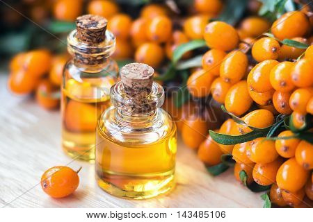 Essential oil of sea buckthorn (Hippophae) in glass bottle with fresh, juicy ripe yellow berries on the branch with green leaves-beauty treatment. Spa concept. Selective focus.