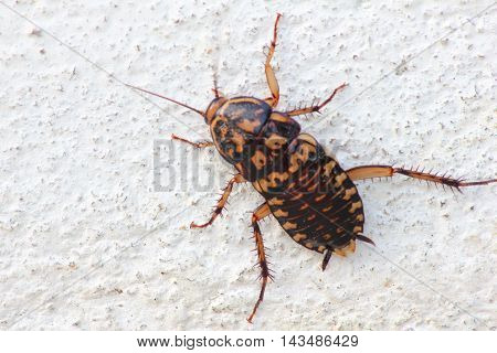 Close-up cockroach clambering at the wall of house
