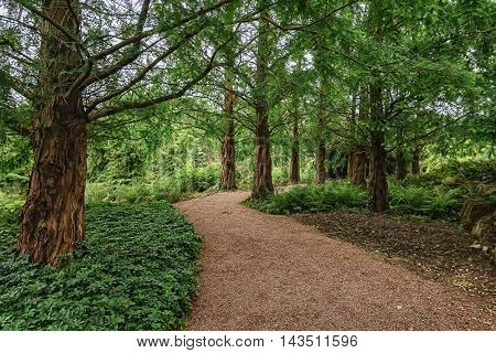 Winding path in the park among the trees.