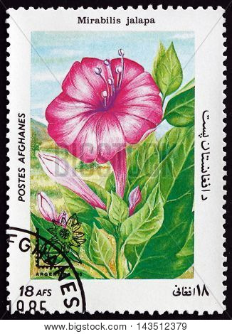 AFGHANISTAN - CIRCA 1985: a stamp printed in Afghanistan shows Marvel of Peru Mirabilis Jalapa Flowering Plant circa 1985