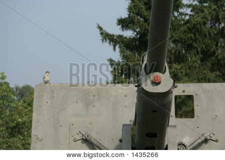 Sparrow On A Gun