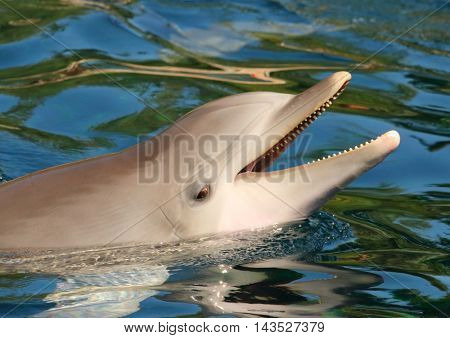 Dolphin smiling. Funny and friendly animal. Greeting from tropical paradise.