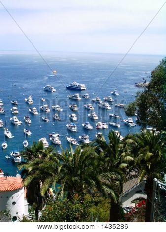 Harbor At Catalina Island