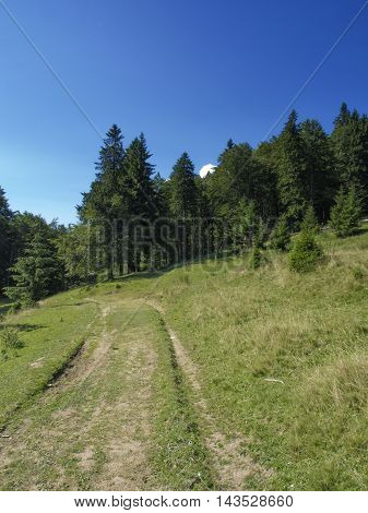 Path in the woods - View from Bucegi National Park Mountains, Romania