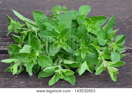 Wild oregano or Origanum vulgare fresh green leaves on wooden background side close up view