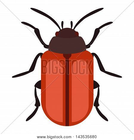 Beetle bug insect isolated on white background vector wildlife animal vector bug. Nature water beetle and zoology water beetle bug. Wildlife insect water black beetle ecology detail.