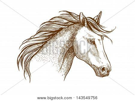 Sketched stallion horse icon with a head of arabian colt. Equestrian sport theme, horse racing or riding club symbol design