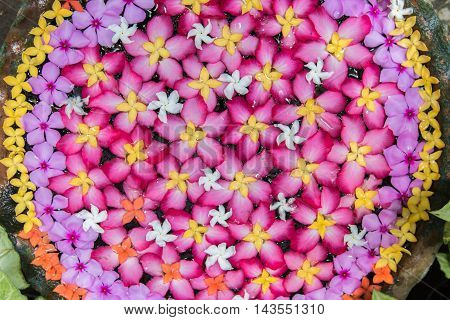 Colorful flower in jar., Background and Texture.