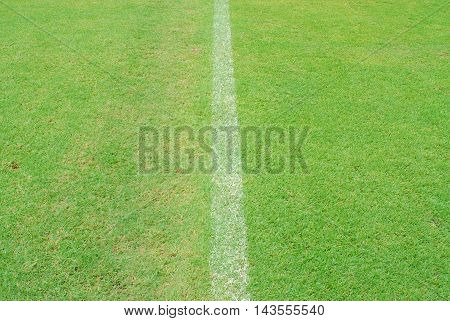 White Line On Green Grass Of Football Yard Stadium