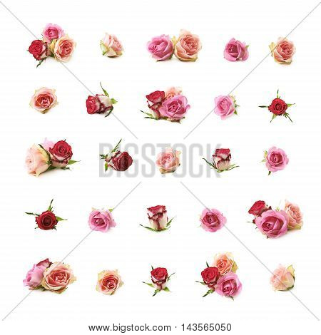 Set of multiple rose buds of different colors and foreshortenings, compositions isolated over the white background
