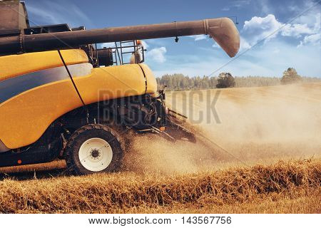 Yellov Harvester On Field Harvesting Gold Wheat